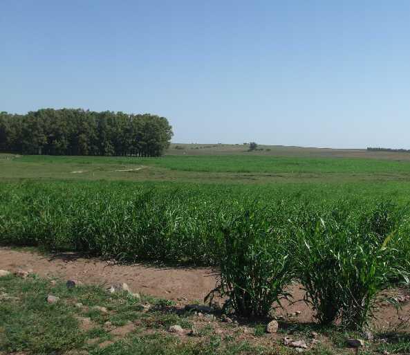 farmland uruguay