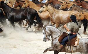 horses Uruguay